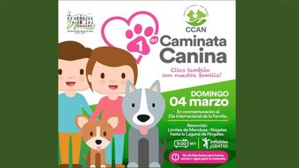 caminata canina en nogales