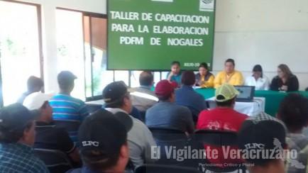 aplican plan de desarrollo forestal municipal en nogales