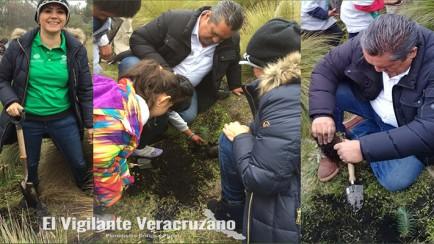 reforestacion en villas pico2