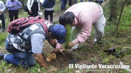 reforestacion en la cuesta ciudad mendoza