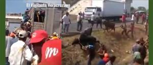 roban ganado en cosoloeacaque