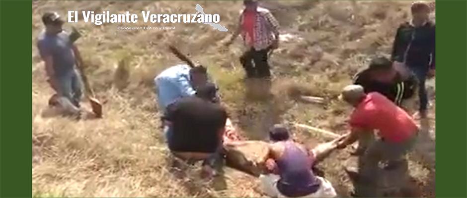 roban ganado en cosoloeacaque2