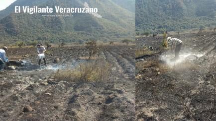 incendio acaba con cultivo de aguacate hass