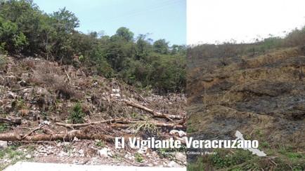 deforestacion en zongolica
