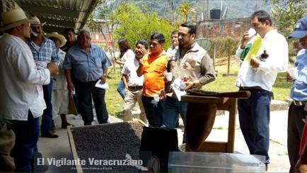 inpi apoya a cafeticultores de zongolica