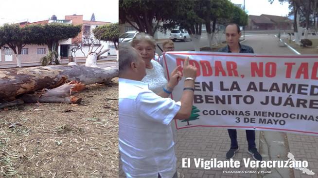 tala ilegal de árboles en alameda de ciudad mendoza