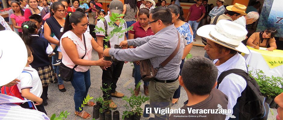 programa de reforestación emergente en zongolica4