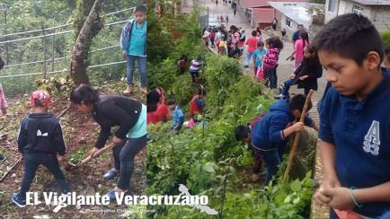 reforestación de áreas verdes de magdalena
