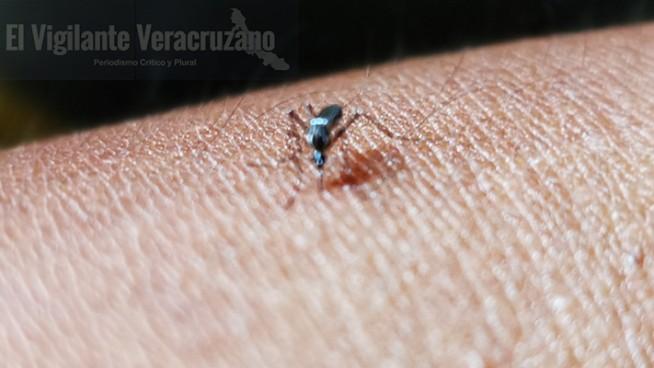 casos de dengue en rafael delgado