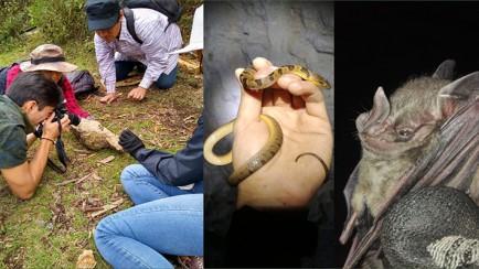 especies de fauna en nogales