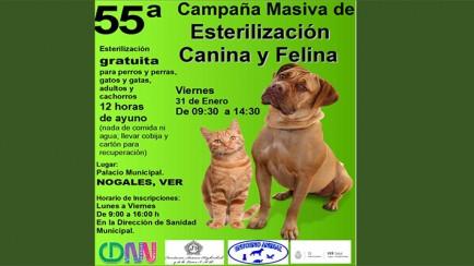 esterilización canina y felina en nogales