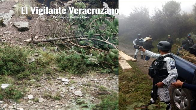 talamontes devastan el parque del pico de orizaba